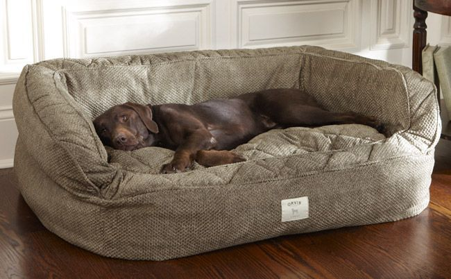Best dog beds for big dogs